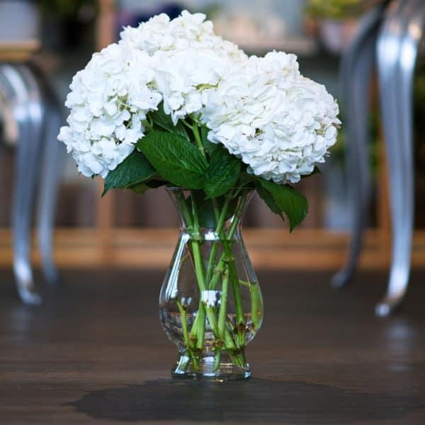 White Hydrangeas in a Vase