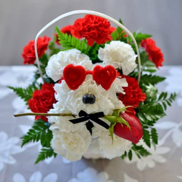 Carnation Puppy