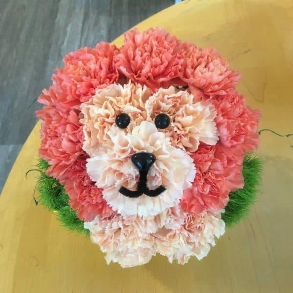 Carnation Lion