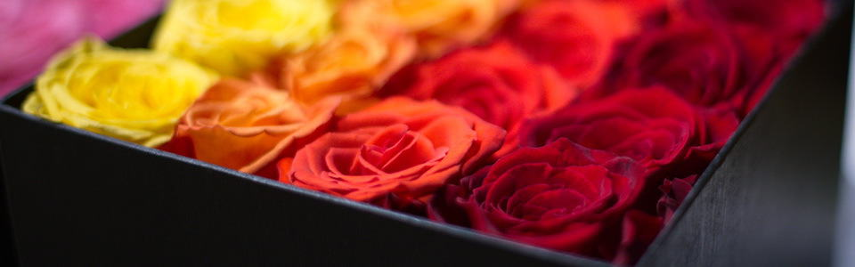 Buy Flowers - Boxed Roses