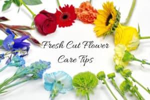 Fresh Cut Flower Care Tips