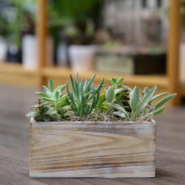 Succulent Garden Box